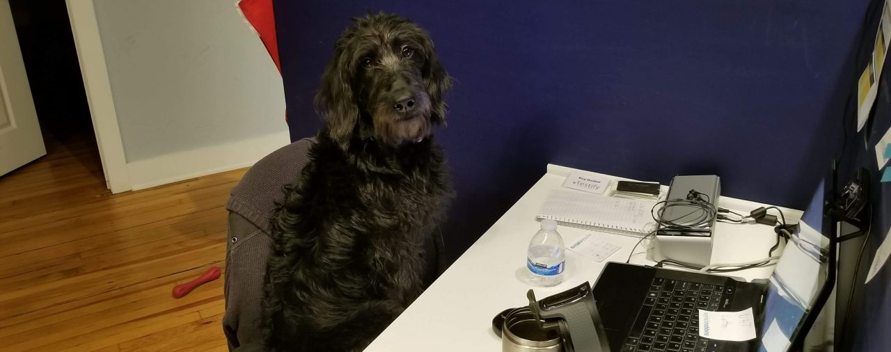 A Day in the Life of the Office Dog